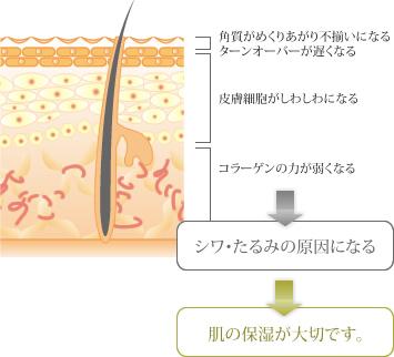 乾燥の皮膚への影響
